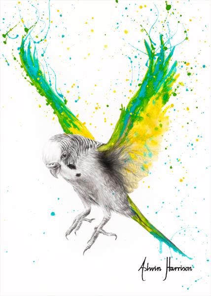 The Bold Budgie by Ashvin Harrison
