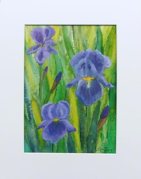 Irises by Barry Toms