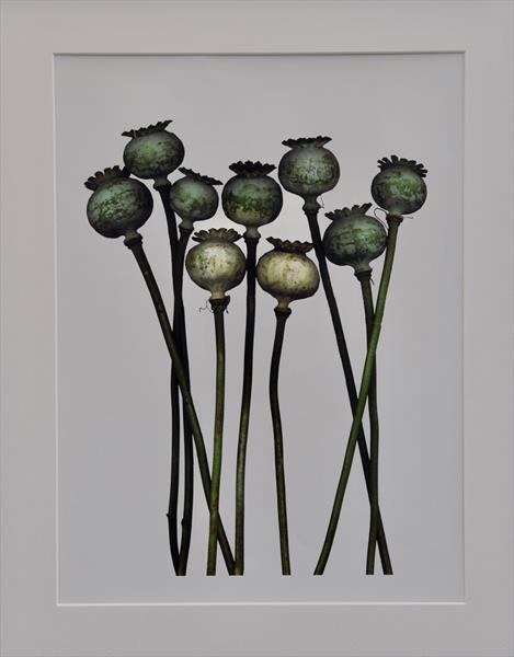 Dead Poppies by Mick Rafferty