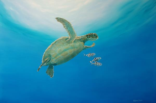 Green turtle and pilot fish by ANDREW HASLER