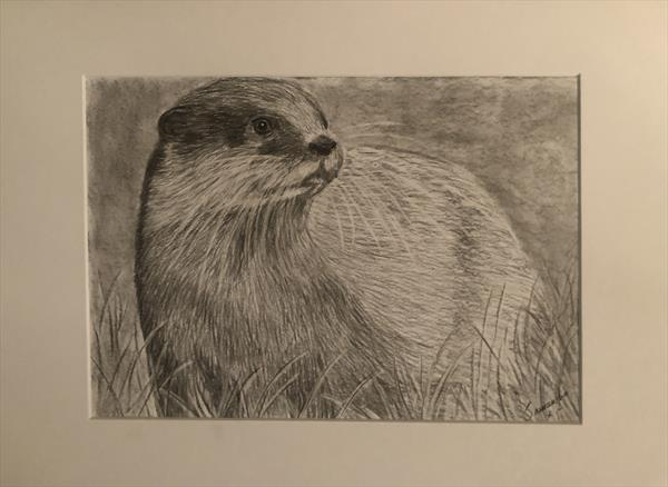 Scottish Otter by Samantha King