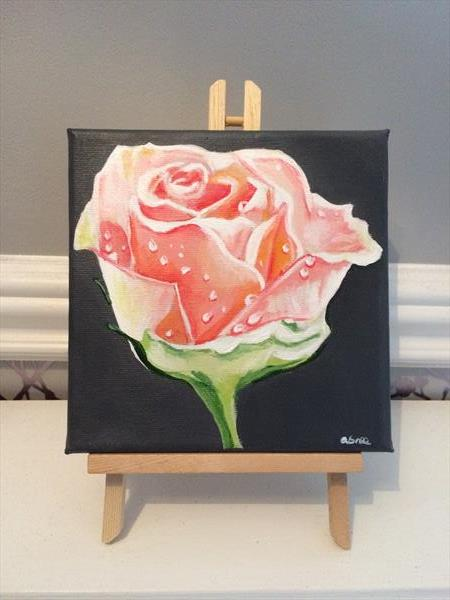 Peach rose  by Andrew Snee