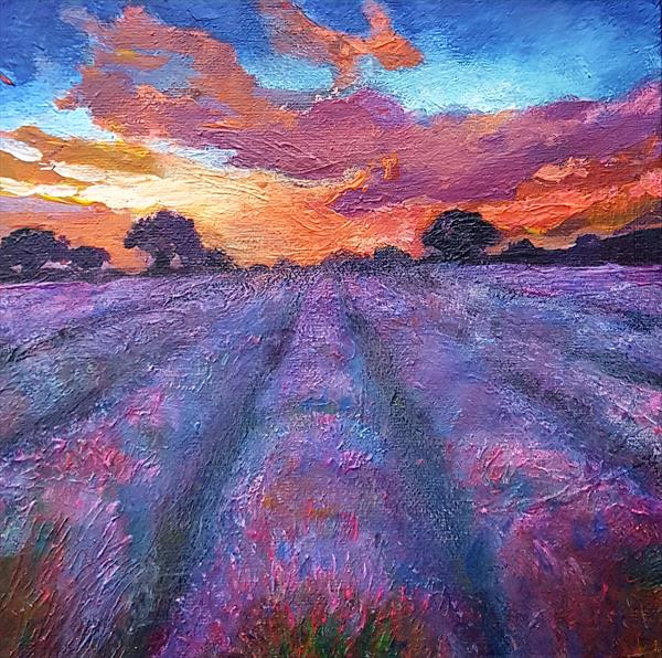Lavender Field at Dawn by Shirley Wright
