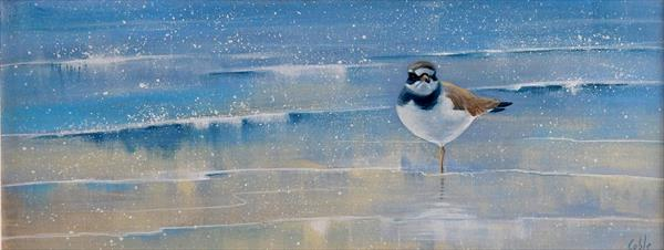 Ringed Plover by Denise Coble