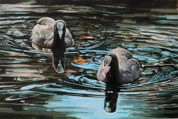Coots on winter water (framed) by Michael Field