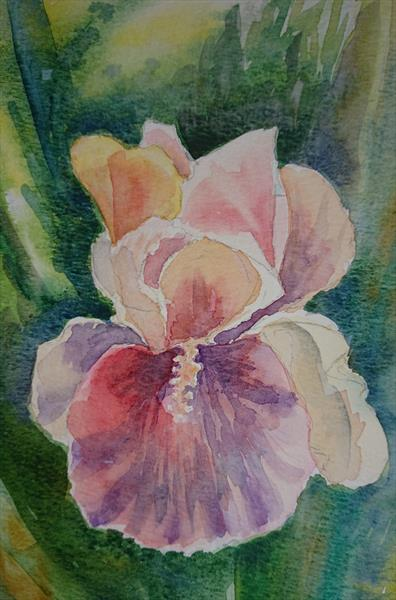 Pink Iris flower light and shade Winsor & Newton Artist watercolour paper A4 by Elena Haines