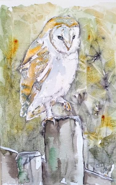 Barn Owl in Autumn by Gillian O'Neil