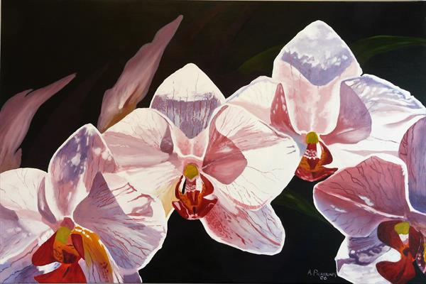 Orchids by Andrew Pickering
