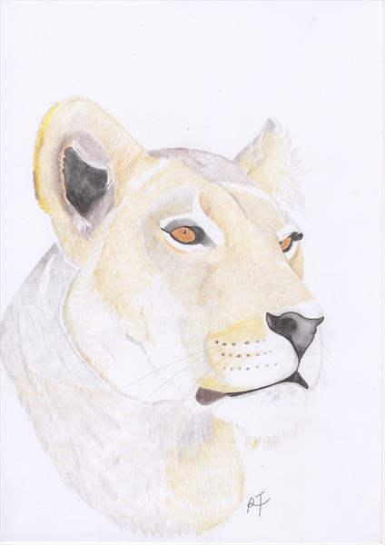Lioness by Raven Taylor