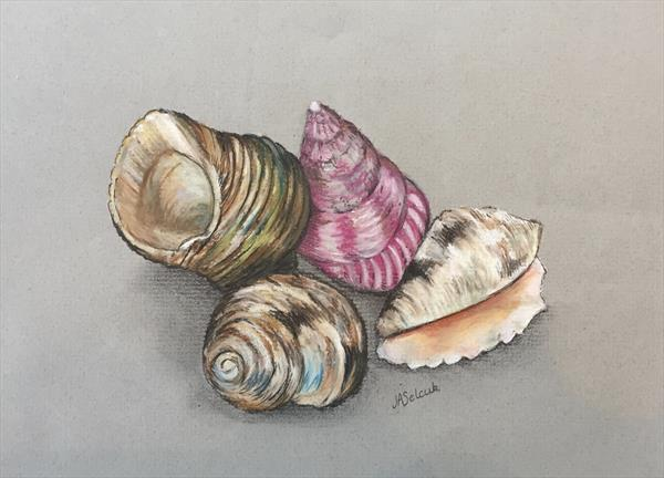 She Sells Seashells by Judith Selcuk