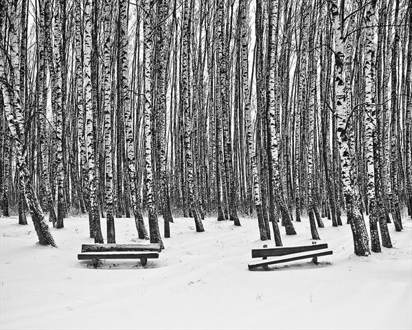 Birches and Benches by Beata Podwysocka