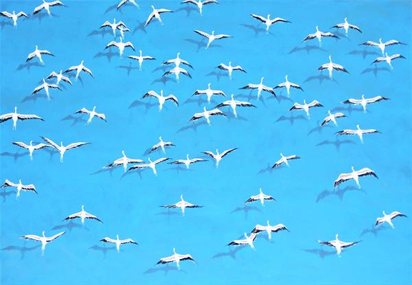 The Migration of flamboyance  by Daniel Shipton