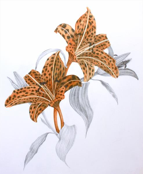 Leopardprint lillies by Paula Marshall