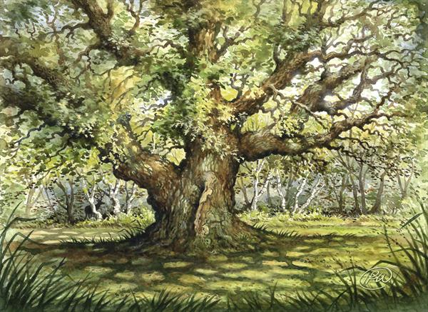 Major Oak Splendour by Ian R Ward