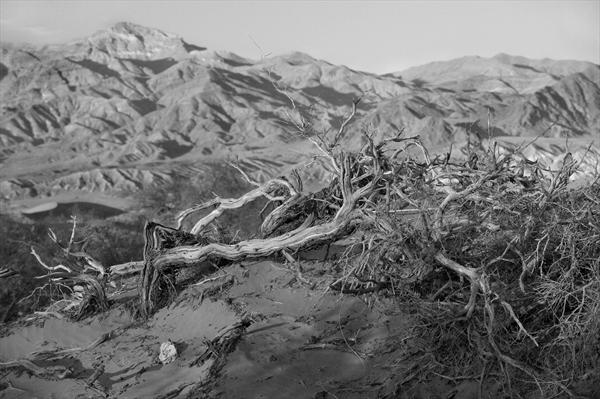 Fallen Tree, Death Valley by Lindsay Robertson