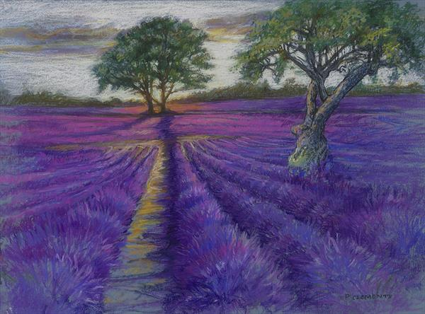 Evening sun over Lavender Fields  by Patricia Clements