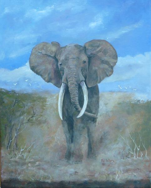 Bull Elephant by Phil Willetts