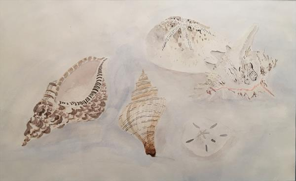 Sea Shells by Peter Cross
